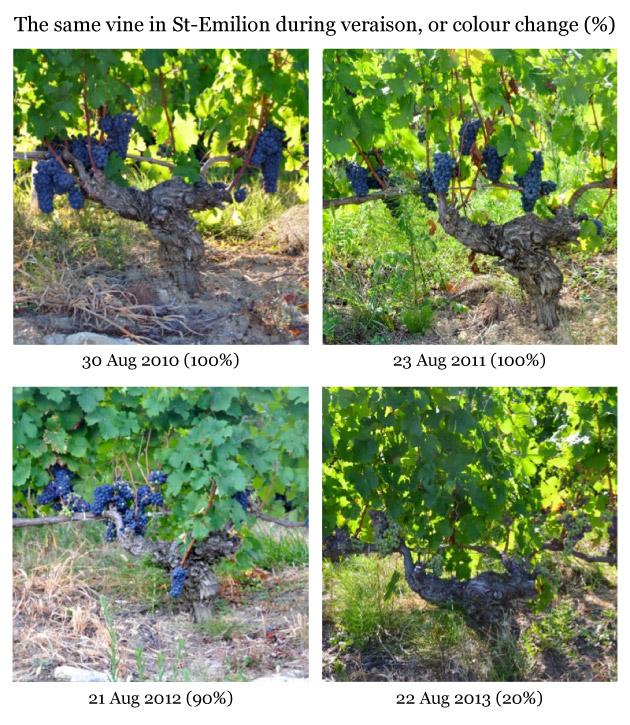 Same-vine-Tertre-Roteb-10_11_12_13-liv-ex