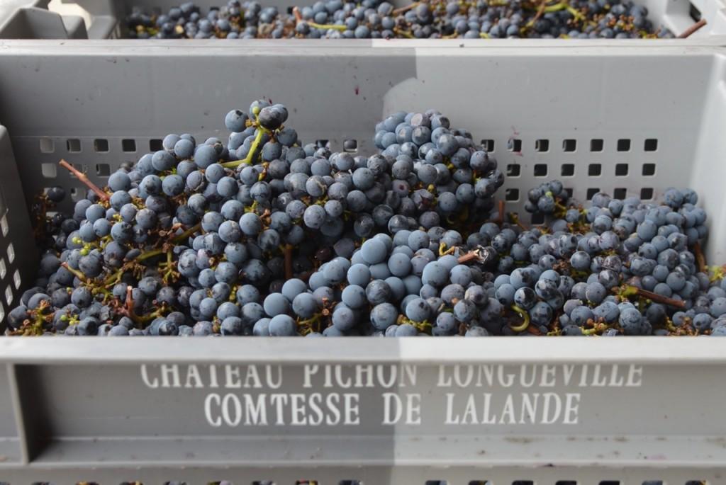 Ch Pichon Lalande, Pauillac, 8 October 2013.