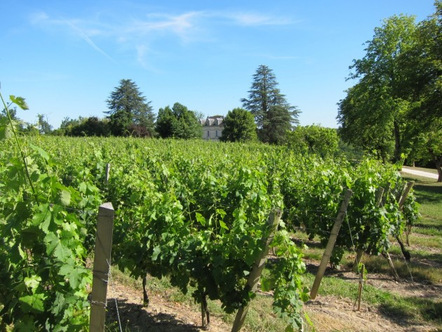 23 May 2011, Chateau Bauduc. An early vintage that got off to a flyer.