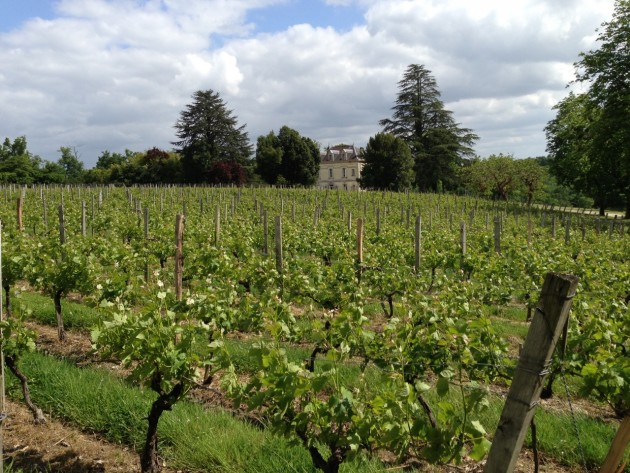 23 May 2013, Chateau Bauduc. Way behind - and in August, we'd be hit by hail.