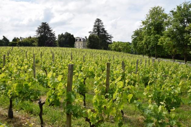 23 May 2015, Chateau Bauduc.