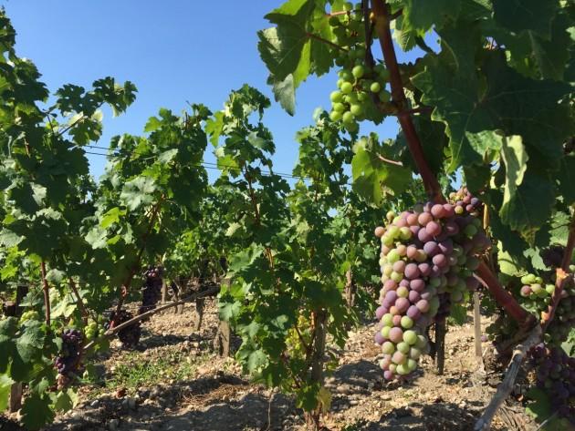 Bordeaux2015August5